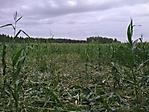 Jagdbilder_2